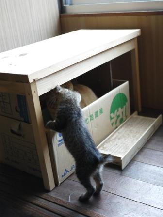 猫のお友だち ミミ子ちゃんソラ男くん編。_a0143140_2345295.jpg