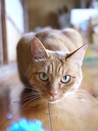 猫のお友だち ミミ子ちゃんソラ男くん編。_a0143140_23543224.jpg