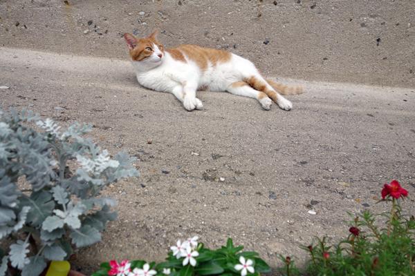 谷中の猫とヒマラヤ杉 10か月ぶりに谷中でピンホール写真撮影_f0117059_22135879.jpg