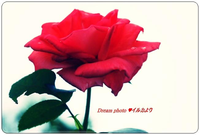 f0304384_7304042.jpg