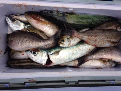 17日〜18日夜釣りでクエやイサギなど大爆釣\(^o^)/_d0114397_08493315.jpg