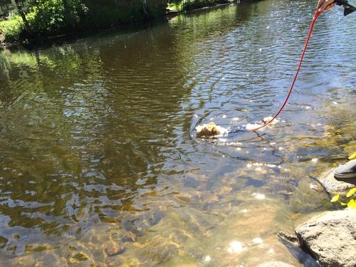 川で海水浴!!_a0229904_2359785.jpg
