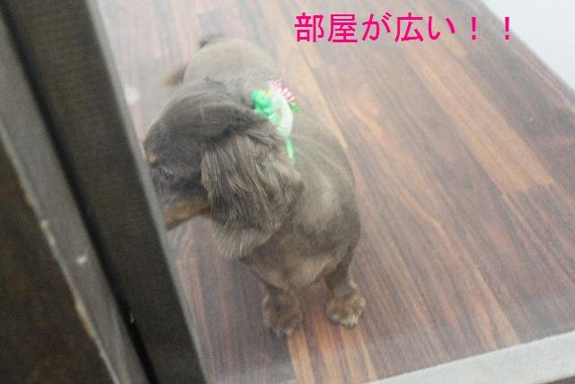 b0130018_2011512.jpg