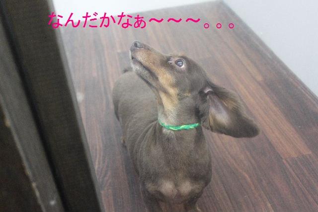 b0130018_20115629.jpg