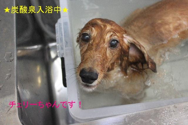 b0130018_20123441.jpg