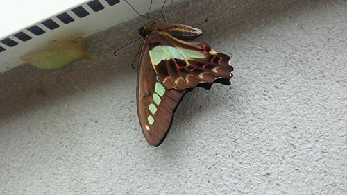 Butterfly_c0120834_07372356.jpg