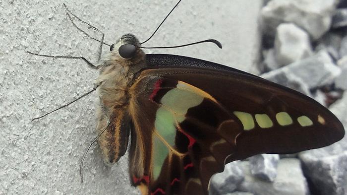 Butterfly_c0120834_07372711.jpg