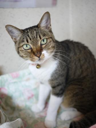 猫のお友だち メイちゃんポポちゃんゴロくん編。_a0143140_16272423.jpg