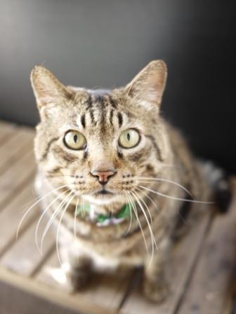 猫のお友だち メイちゃんポポちゃんゴロくん編。_a0143140_16282080.jpg