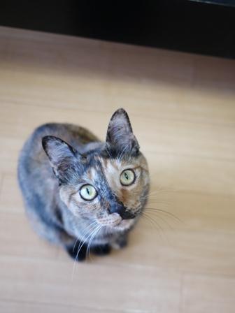 猫のお友だち ようちゃん編。_a0143140_1638527.jpg