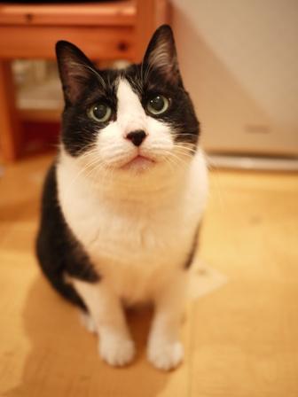 お誕生日猫 空17歳編。_a0143140_2051713.jpg