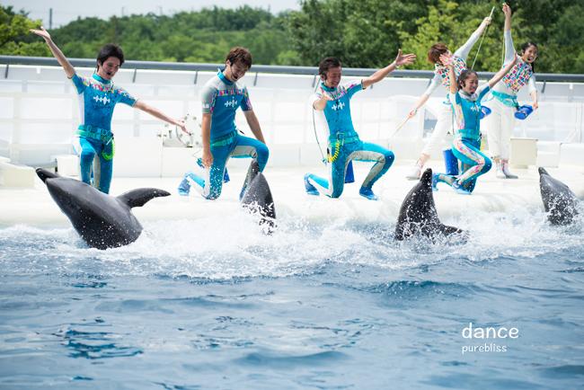 水族館のイルカショーランキング!ベスト8 | ナゼ …