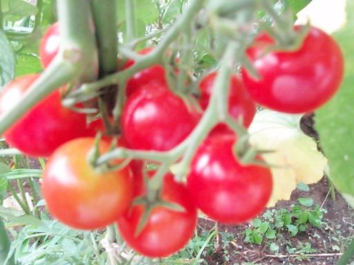 家庭菜園_a0207196_12345271.jpg