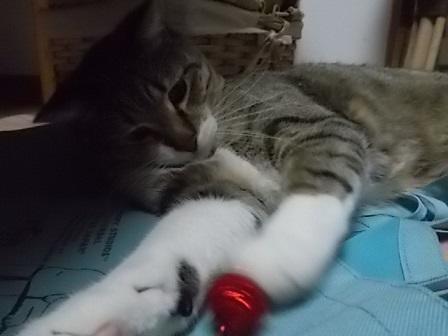赤いボールとも遊ぶんだい!_f0316507_09214867.jpg