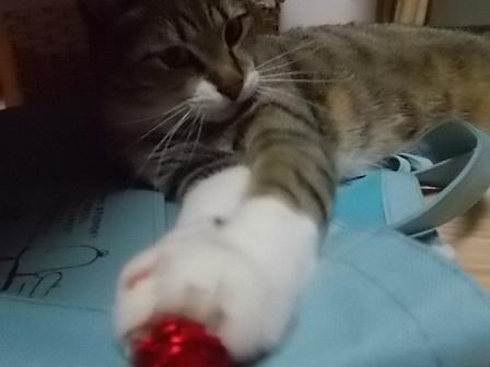 赤いボールとも遊ぶんだい!_f0316507_09402997.jpg