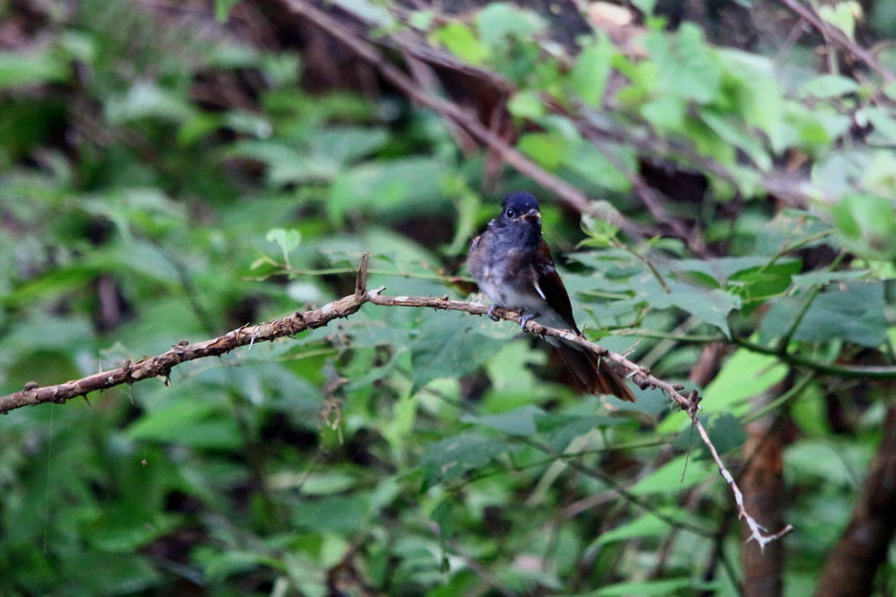 今日の鳥見(2014年7月21日)_f0235311_20411820.jpg