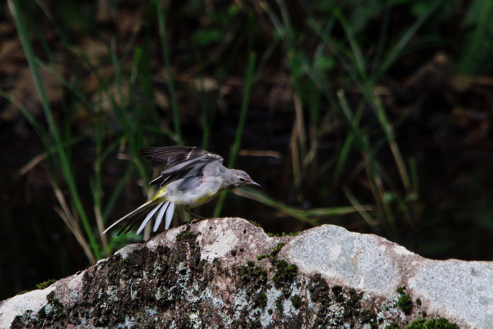 今日の鳥見(2014年7月21日)_f0235311_20444014.jpg