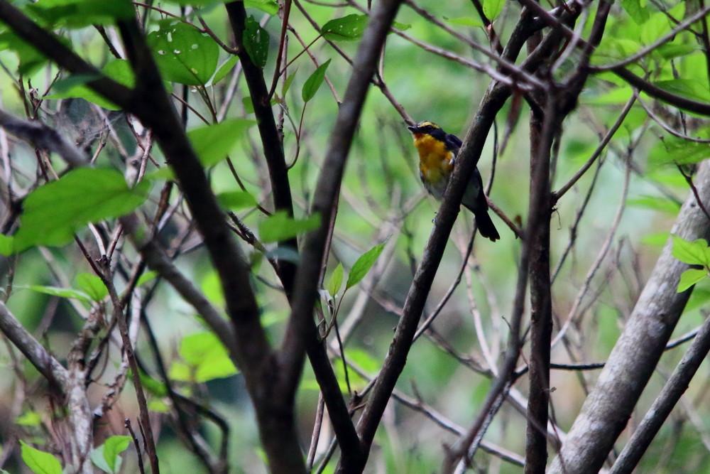 今日の鳥見(2014年7月21日)_f0235311_2045596.jpg