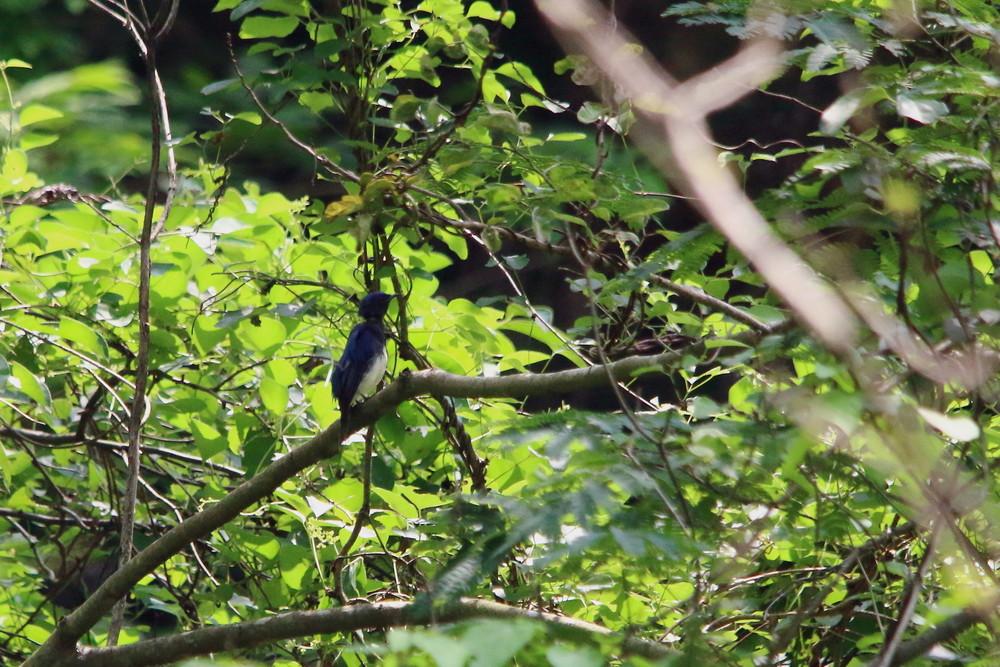 今日の鳥見(2014年7月21日)_f0235311_20483745.jpg