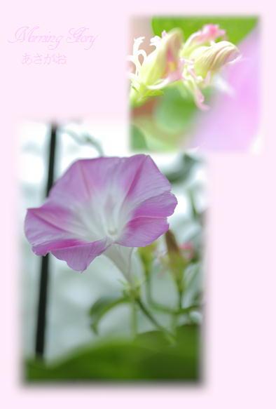夏の花_f0292335_14235581.jpg