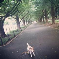 楽しい散歩♪♪♪_f0013255_13193899.jpg