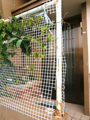 玄関前フェンスの復活_c0180460_22244969.jpg