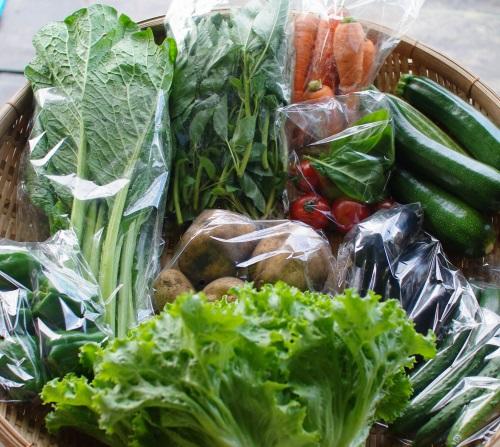 今週の野菜セット(7/22~7/26着)_c0110869_1431323.jpg