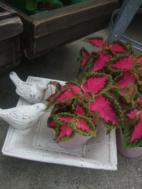 オークリーフ(夏におすすめの花瓶)_f0049672_186278.jpg