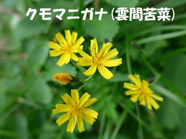 f0350083_16153050.jpg
