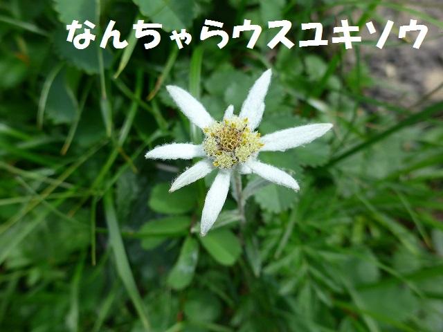 f0350083_16272930.jpg