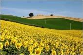向日葵畑を見たくてーー大撃沈のプチ日曜日_c0179785_1285777.jpg