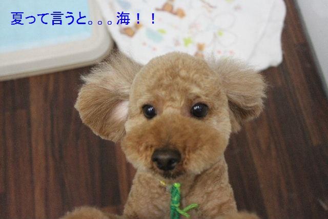 夏休みのお泊りはお早めに!!_b0130018_610495.jpg