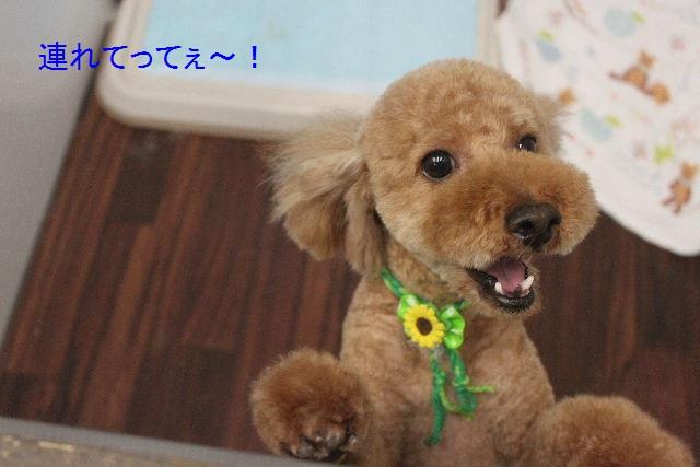 夏休みのお泊りはお早めに!!_b0130018_6105680.jpg
