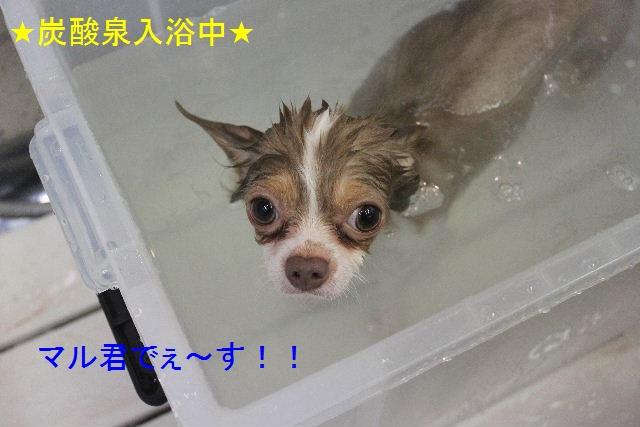 夏休みのお泊りはお早めに!!_b0130018_6112100.jpg