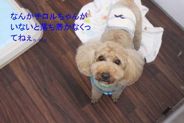 夏休みのお泊りはお早めに!!_b0130018_661279.jpg