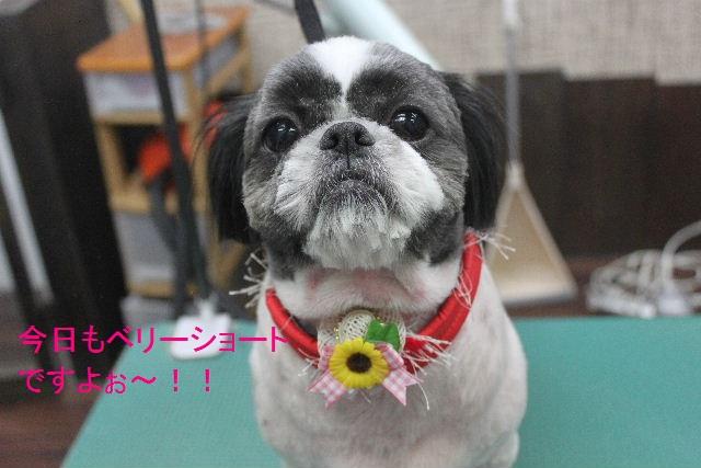夏休みのお泊りはお早めに!!_b0130018_69994.jpg