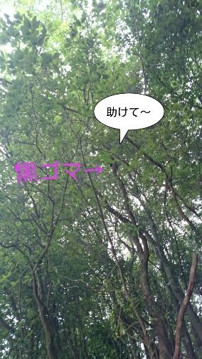 b0187620_21411529.jpg