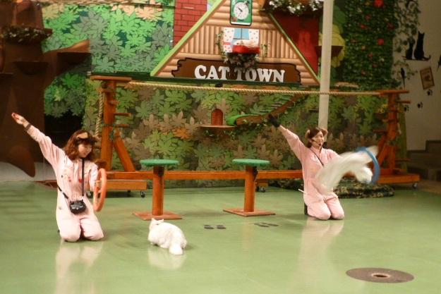 那須旅行 那須どうぶつ王国-3 【The Cats】_e0237625_22355975.jpg