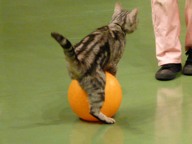 那須旅行 那須どうぶつ王国-3 【The Cats】_e0237625_22392623.jpg