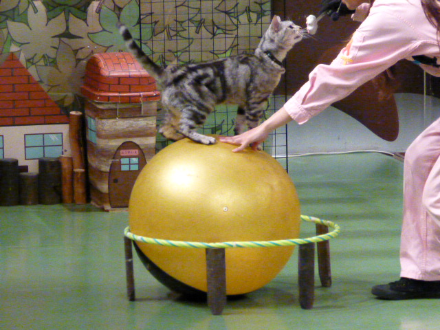 那須旅行 那須どうぶつ王国-3 【The Cats】_e0237625_22404982.jpg