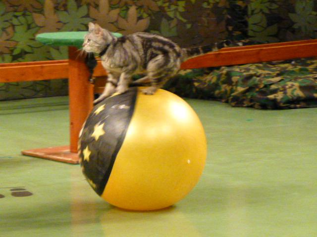 那須旅行 那須どうぶつ王国-3 【The Cats】_e0237625_22454770.jpg