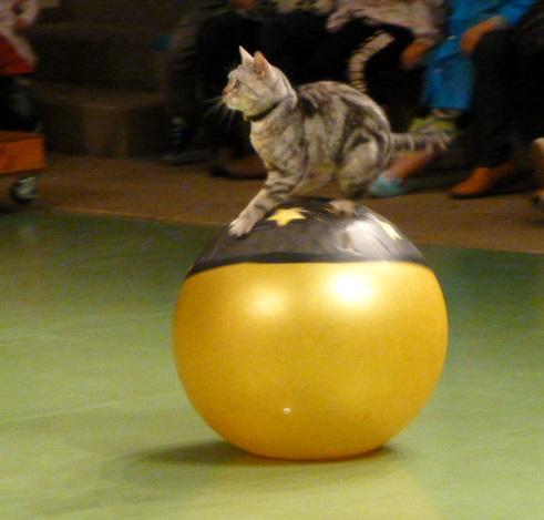 那須旅行 那須どうぶつ王国-3 【The Cats】_e0237625_23501810.jpg