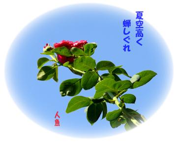b0023728_14503628.jpg