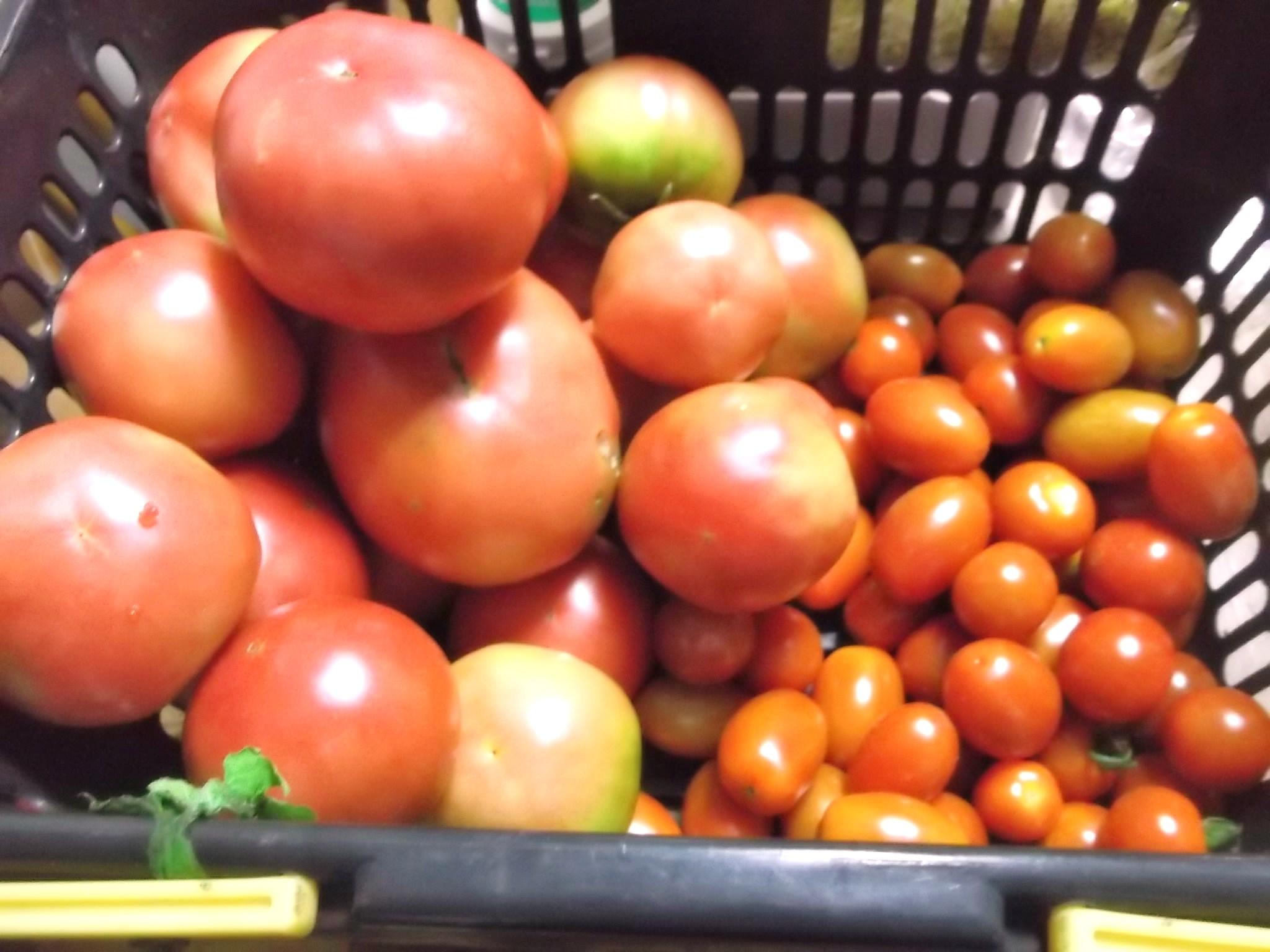 トマトはよく出来ました、はなまるです!_b0137932_17142439.jpg