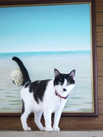猫のお友だち ハナちゃんホビちゃんエムくんライオンちゃんガブくんハルちゃんダイヤちゃんフーちゃん編。_a0143140_2056239.jpg