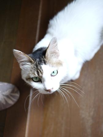 猫のお友だち ハナちゃんホビちゃんエムくんライオンちゃんガブくんハルちゃんダイヤちゃんフーちゃん編。_a0143140_2057052.jpg