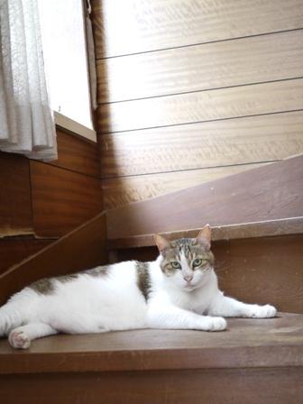 猫のお友だち ハナちゃんホビちゃんエムくんライオンちゃんガブくんハルちゃんダイヤちゃんフーちゃん編。_a0143140_20585679.jpg