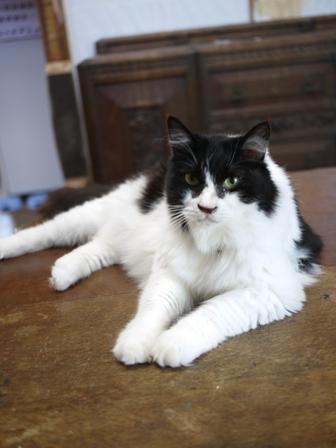 猫のお友だち ハナちゃんホビちゃんエムくんライオンちゃんガブくんハルちゃんダイヤちゃんフーちゃん編。_a0143140_2103370.jpg