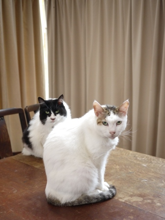 猫のお友だち ハナちゃんホビちゃんエムくんライオンちゃんガブくんハルちゃんダイヤちゃんフーちゃん編。_a0143140_210456.jpg