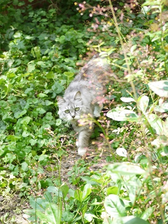 猫のお友だち ハナちゃんホビちゃんエムくんライオンちゃんガブくんハルちゃんダイヤちゃんフーちゃん編。_a0143140_211310.jpg